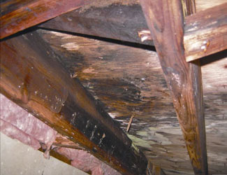 mold and rot in a Winston-Salem crawl space