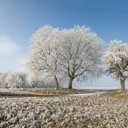 Frost covering trees and a grassy field in Jamestown